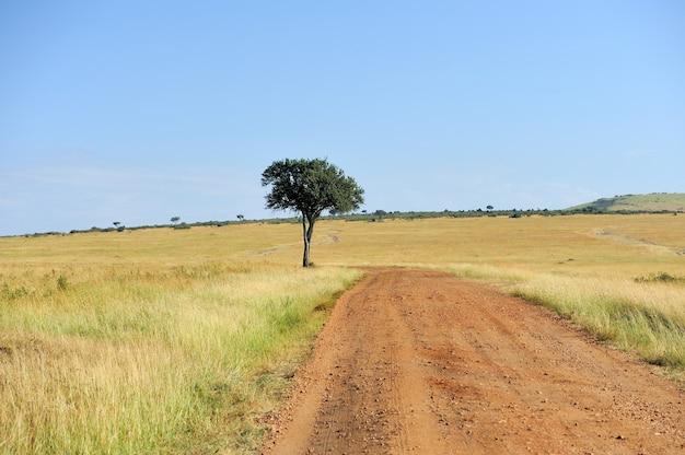 Krajobraz bez drzewa w parku narodowym afryki