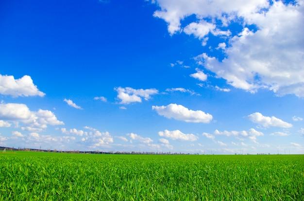 Krajobraz błękitne niebo