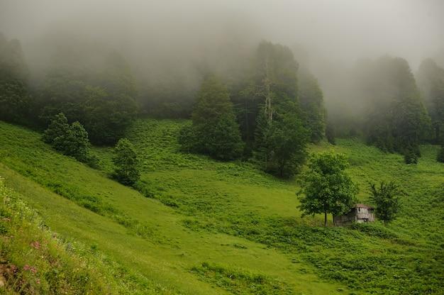 Krajobraz drewniani domy stoi na zielonym polu w wiecznozielonym lesie w mgle