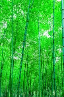 Krajobraz drewno światło las orient