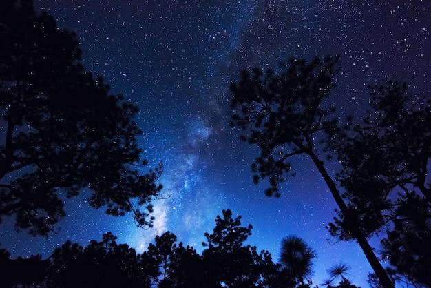 Krajobraz droga mleczna z gwiaździstą nocą w błękitne niebo nad lasem