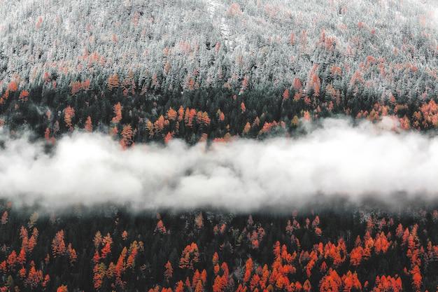 Krajobraz drzew pomarańczowych z mgły
