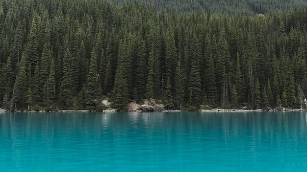 Krajobraz drzew w pobliżu zbiornika wodnego