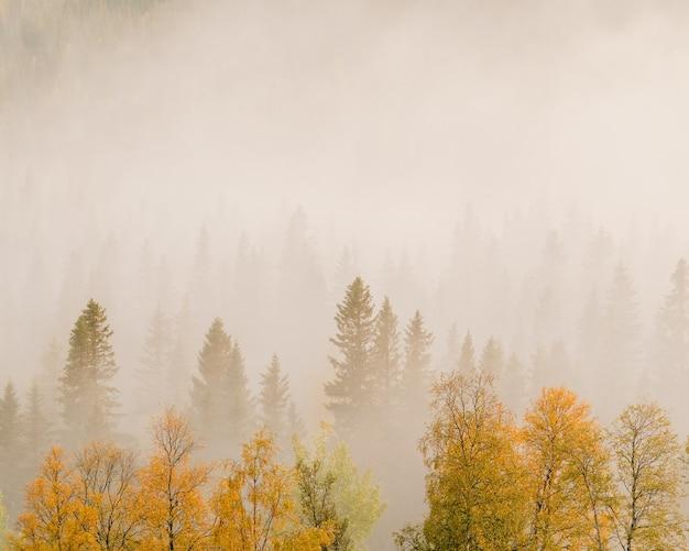 Krajobraz drzew z kolorowymi liśćmi w lesie pokrytym mgłą