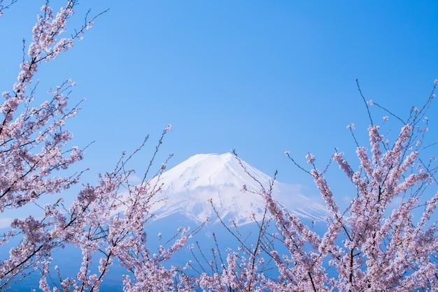 Krajobraz gór fuji. podróże i zwiedzanie japonii na wakacjach. sakura kwiat wiosną i latem.
