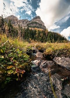 Krajobraz gór skalistych i strumienia płynącego w jesiennym lesie w parku prowincjonalnym assiniboine, kanada
