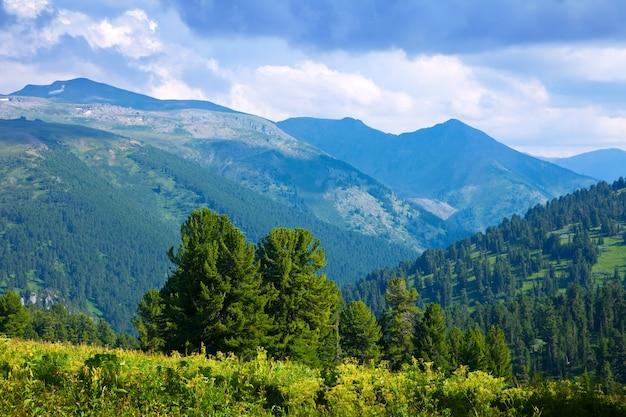 Krajobraz górski z lasem cedrowym