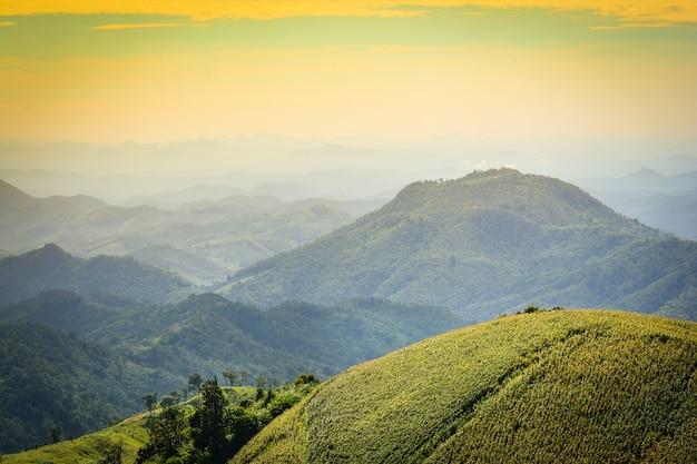 Krajobraz górski z zielonym polu kukurydzy rolnictwo na wzgórzu / farma moutain asian tha