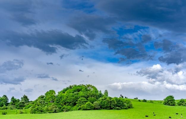 Krajobraz górskich łąk w pogodny dzień po deszczu