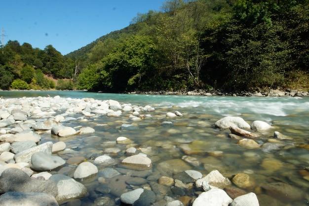 Krajobraz górskiej rzeki w pobliżu lasu