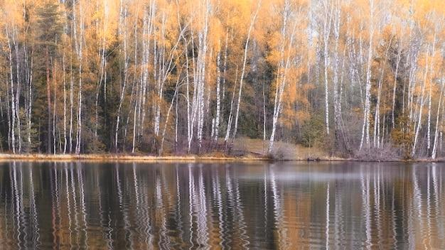 Krajobraz jesienny las brzozowy w pobliżu jeziora.