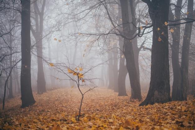 Krajobraz, jesienny park we mgle, z żółtymi opadłymi liśćmi
