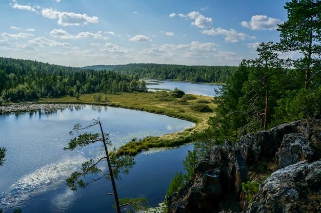 Krajobraz jeziora z drzewami