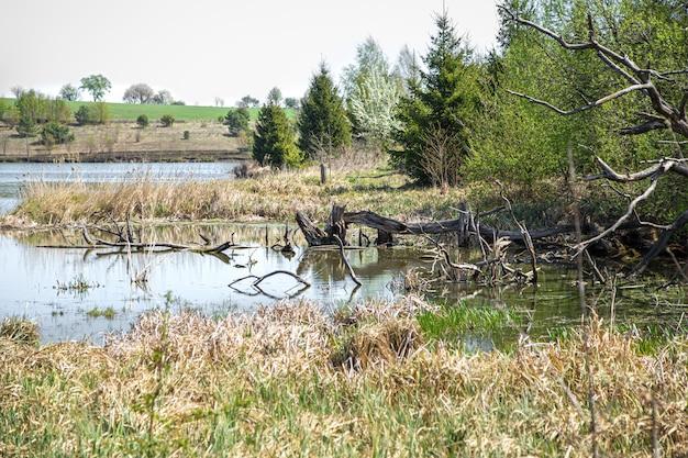 Krajobraz. jezioro i bagno pośród pięknych drzew.