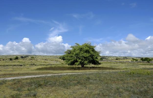 Krajobraz kambera puru