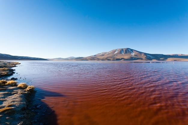 Krajobraz laguna colorada w boliwii