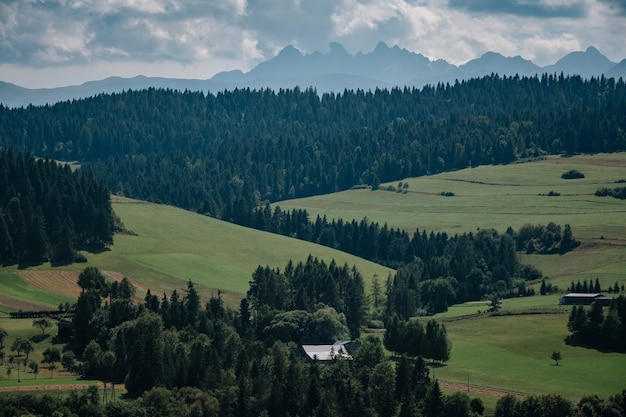 Krajobraz łąki z błękitnym niebem