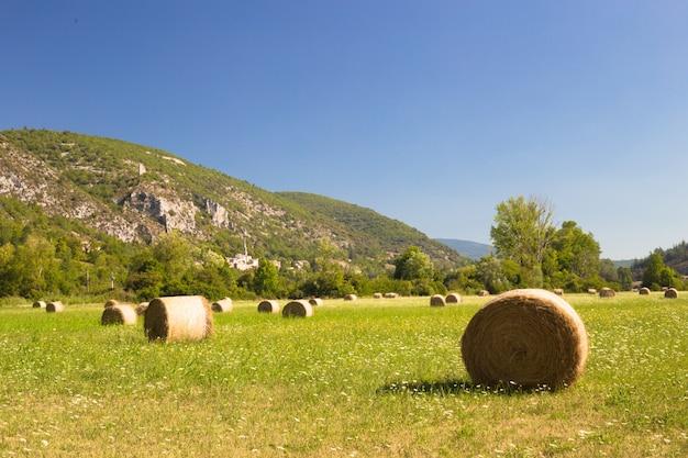 Krajobraz łąkowy