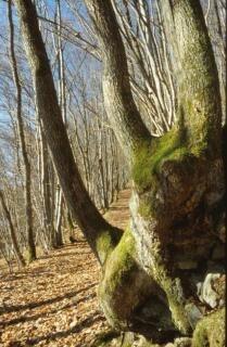 Krajobraz las, gałęzie