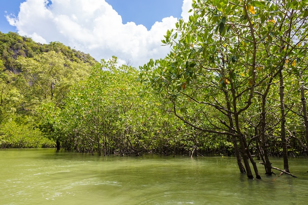 Krajobraz las lato rzeka zakres.