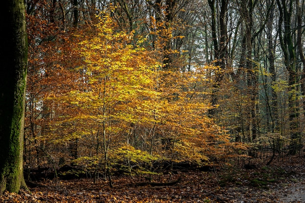 Krajobraz lasu otoczonego drzewami pokrytymi kolorowymi liśćmi pod słońcem jesienią