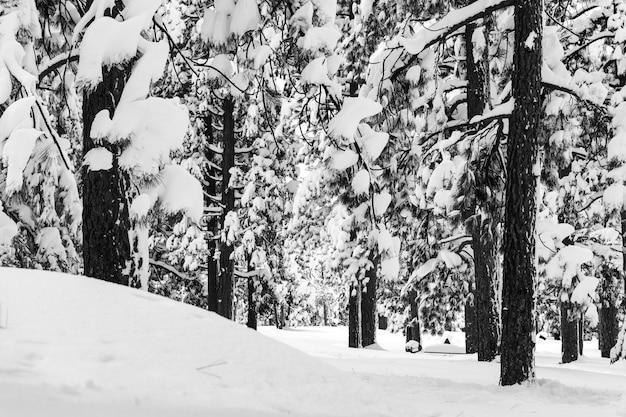 Krajobraz lasu otoczony drzewami pokrytymi śniegiem w słońcu