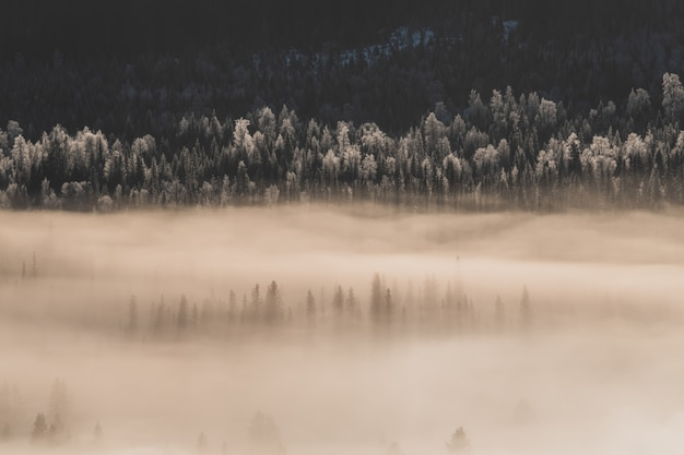 Krajobraz lasu pokryty śniegiem i mgłą w promieniach słońca w zimie