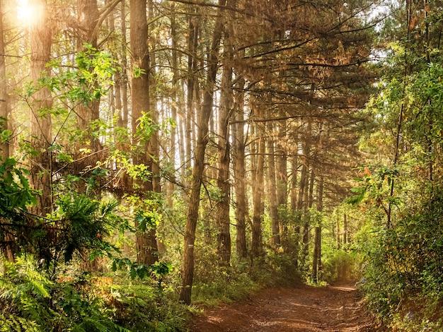 Krajobraz leśnej drogi