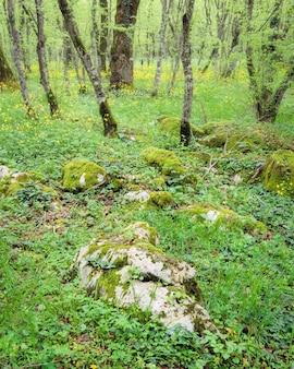 Krajobraz leśny, duża skała w glebie otoczona poszyciem leśnym porośniętym kwiatami.
