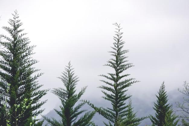 Krajobraz leśny z mgłą w górach mglisty widok na góry lasu iglastego i sosnowego w europejskich alpach wiosną lub jesienią wysokiej jakości zdjęcie