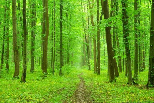 Krajobraz leśny