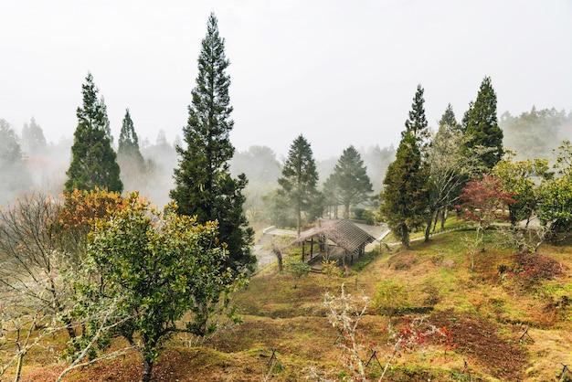Krajobraz mglistego lasu w alishan national forest recreation area