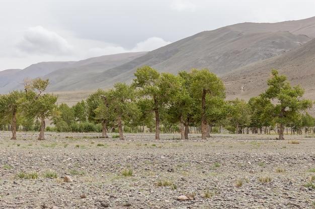 Krajobraz mongolii. park narodowy altai tavan bogd w bayar-ulgii.
