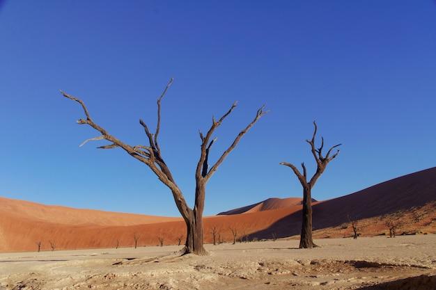 Krajobraz nieżywy vlei, sossusvlei, namib pustynia, namibia, południowa afryka