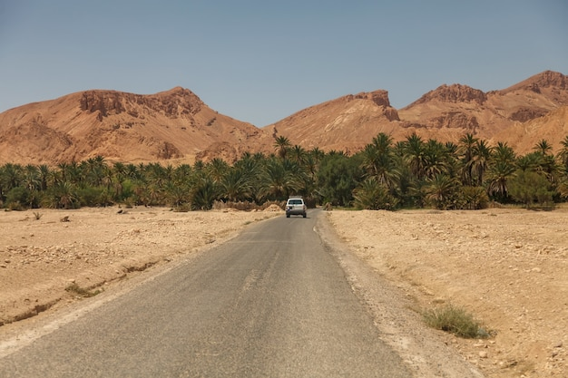 Krajobraz oazy chebika na saharze. samochód wjeżdża na palmy. malowniczy widok górska oaza w afryce północnej. położony u stóp jebel el negueba. góry atlas w słoneczne popołudnie. tozeur, tunezja