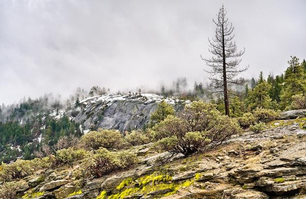 Krajobraz parku narodowego yosemite w kalifornii. w stanach zjednoczonych