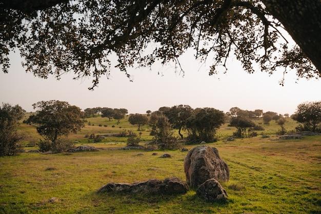 Krajobraz pastwiska estremadura w gospodarstwie pełnym dębów ostrolistnych i różnych drzew typowego ekosystemu