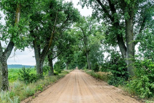 Krajobraz piaszczystej drogi przez aleję drzew