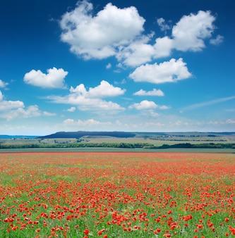 Krajobraz pięknego pola maku