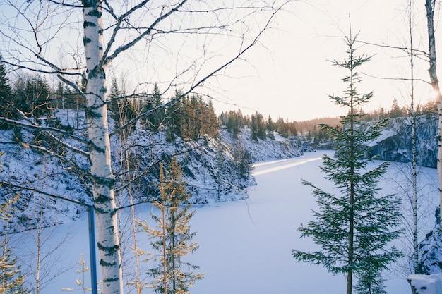 Krajobraz pięknego zimowego lasu. śnieżny cichy kanion