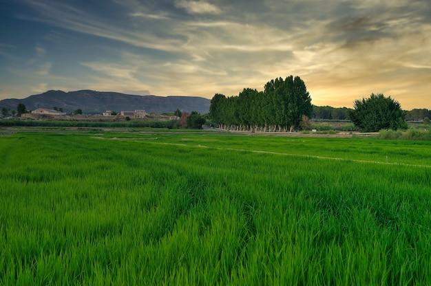 Krajobraz pól ryżowych w calasparra murcia
