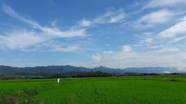 Krajobraz pola ryżowego, góry i błękitne niebo z chmurami