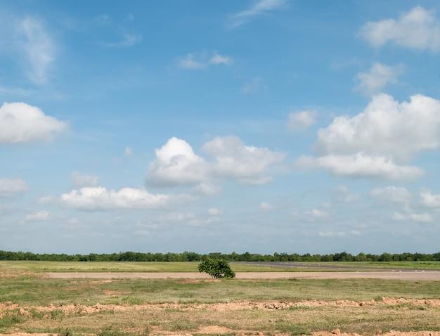 Krajobraz pola trawy i zieleni publicznego parku z błękitnym niebem.
