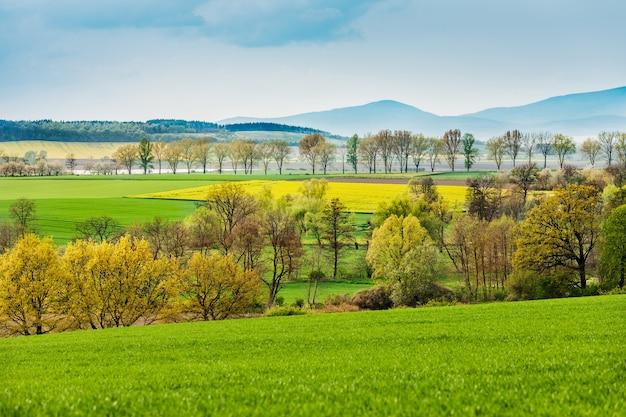 Krajobraz pola z rzepakiem