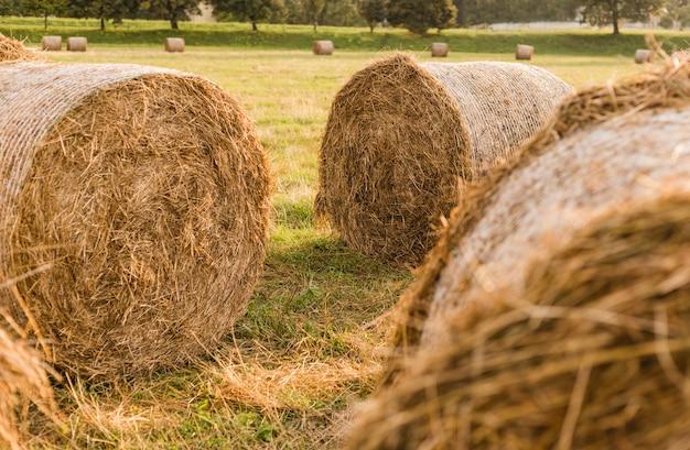 Krajobraz pola zbiorów stogu siana. krajobraz pola rolnictwa stogu siana. rolnicze stogi siana. wiejskie żółte pole