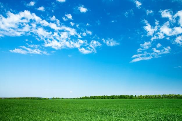 Krajobraz pola
