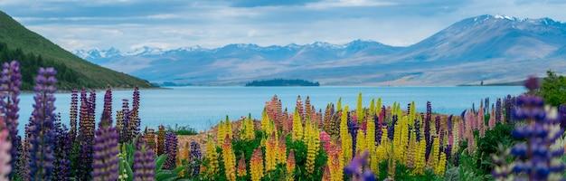 Krajobraz przy jeziornym tekapo łubinu polem w nowa zelandia