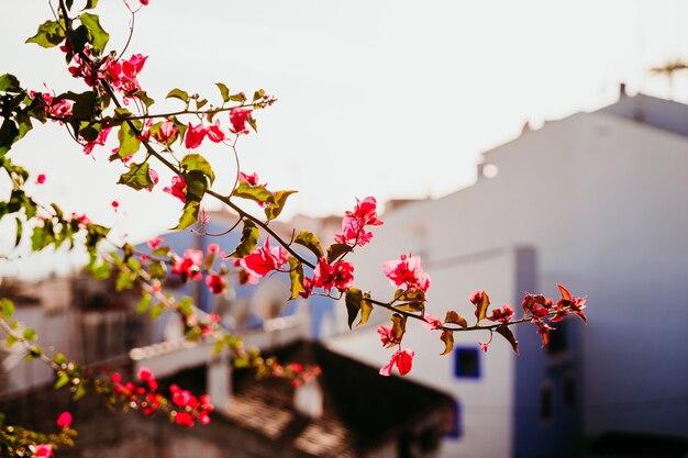 Krajobraz rywalizuje z różowych kwiatów i rozmytego miasta. pojęcie turystyki