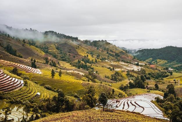 Krajobraz ryżu pole przy azjata