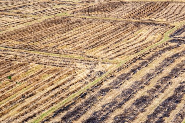 Krajobraz ryżu pole w azja południowo-wschodnia po żniwa.